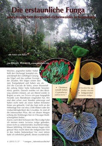 Neu: Kolumbien Pilzartikel - Mushroaming