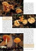 Neu: Kolumbien Pilzartikel - Mushroaming - Seite 2