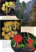 Neu: Kolumbien Pilzartikel - Mushroaming - Seite 3