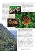 Neu: Kolumbien Pilzartikel - Mushroaming - Seite 4