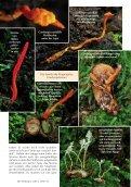 Neu: Kolumbien Pilzartikel - Mushroaming - Seite 6