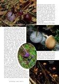 Neu: Kolumbien Pilzartikel - Mushroaming - Seite 7