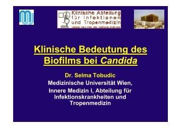 Biofilm von Candida