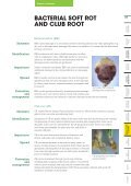 Brassica Diseases - Page 3