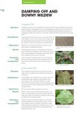 Brassica Diseases - Page 4