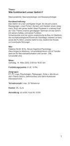 Untitled - Private Berufsfachschule für Ergotherapie Vilshofen - Seite 3
