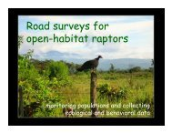 Roadside Surveys - The Peregrine Fund