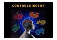 2. funções do controle motor