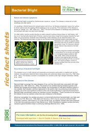 Bacterial Blight - Rice Knowledge Bank - International Rice ...