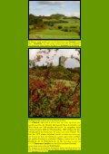 Der Brohltalweg - Kunstwanderungen - Seite 2