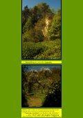 Der Brohlbergeweg - Kunstwanderungen - Seite 5