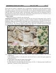Lithostratigraphic Study of the contact between Kometan and - Page 7