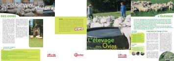 des ovins - La-viande.fr