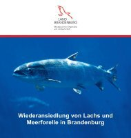 Wiederansiedlung von Lachs und Meerforelle in Brandenburg