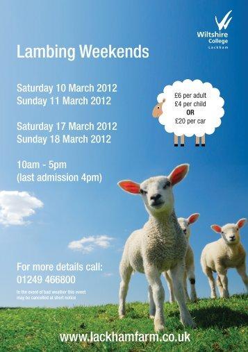 Lambing Weekends