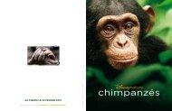 Chimpanzés - La Ferme du Buisson