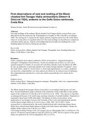 cheeked Ant-Tanager Habia atrimaxillaris - Tropenstation | La Gamba