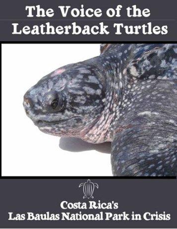 final voice turtle* - Tropenstation | La Gamba