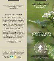 Invasive Plants of the Adirondacks - Adirondack Park Invasive Plant ...