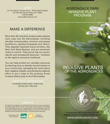 Invasive Plants of the Adirondacks - Adirondack Park Invasive Plant ...
