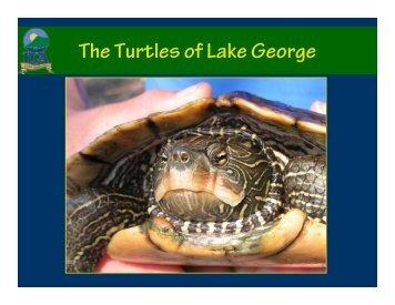 The Turtles of Lake George - Lake George Association