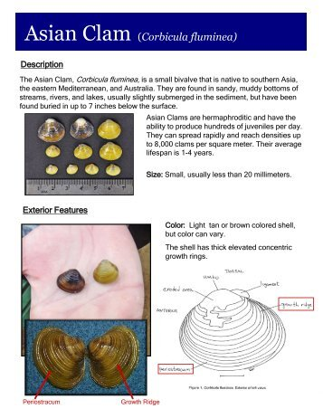 asian singles in clam lake Find wisconsin senior  asian american senior  rapids withee wittenberg rhinelander argonne boulder junction brantwood butternut catawba clam lake conover.