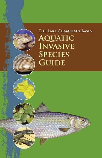Lake Champlain Basin Aquatic Invasive Species Guide