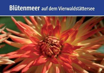 Blütenmeer auf dem Vierwaldstättersee - Schifffahrtsgesellschaft ...