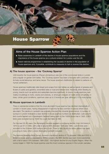 BAP - House Sparrow - Lambeth Council