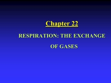 Chapter 22: Respiratory System