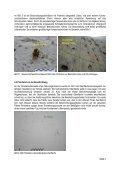 als pdf - Page 3