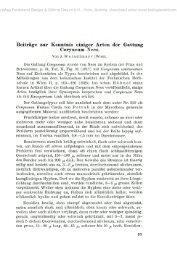 Beiträge zur Kenntnis einiger Arten der Gattung Coryneum Nees.