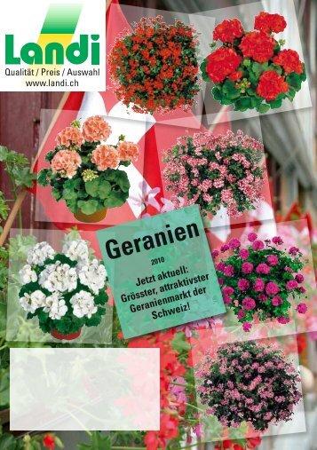Geranien - LANDI Jungfrau AG
