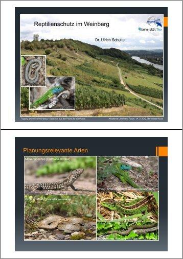 (Microsoft PowerPoint - DLR Mosel Reptilienschutz im Weinberg ...