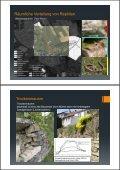 (Microsoft PowerPoint - DLR Mosel Reptilienschutz im Weinberg ... - Seite 3