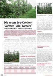 Die roten Eye-Catcher: `Carmen´ und `Tamara´