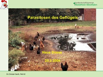 Parasiten beim Geflügel