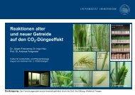 Reaktion alter Getreidesorten auf den CO2-Düngeeffekt