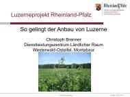 So gelingt der Anbau von Luzerne
