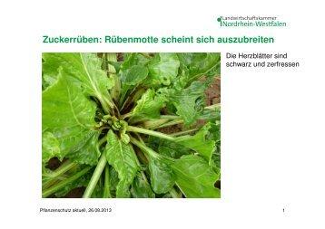 Zuckerrüben, Unkrautbekämpfung Grünland