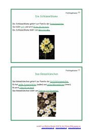 Frühlingsblumen - Lehrerweb.at