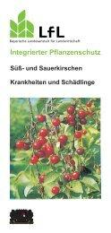 Die Publikation als PDF 670 KB - Bayerische Landesanstalt für ...