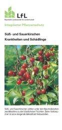 Süß- und Sauerkirschen - Bayerische Landesanstalt für Landwirtschaft