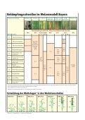 Die Publikation als PDF 2,5 MB - Bayerische Landesanstalt für ... - Page 4