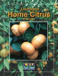Louisiana Home Citrus Production - The LSU AgCenter