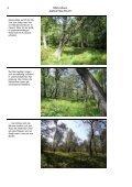 NSG-Album Gebranntes Bruch.pdf - LUWG - Page 4