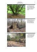 NSG-Album Gebranntes Bruch.pdf - LUWG - Page 7