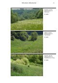 Müllenbachtal - Landesamt für Umwelt, Wasserwirtschaft und ... - Page 5