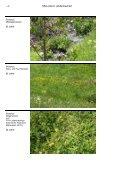 Müllenbachtal - Landesamt für Umwelt, Wasserwirtschaft und ... - Page 6
