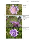 Müllenbachtal - Landesamt für Umwelt, Wasserwirtschaft und ... - Page 7